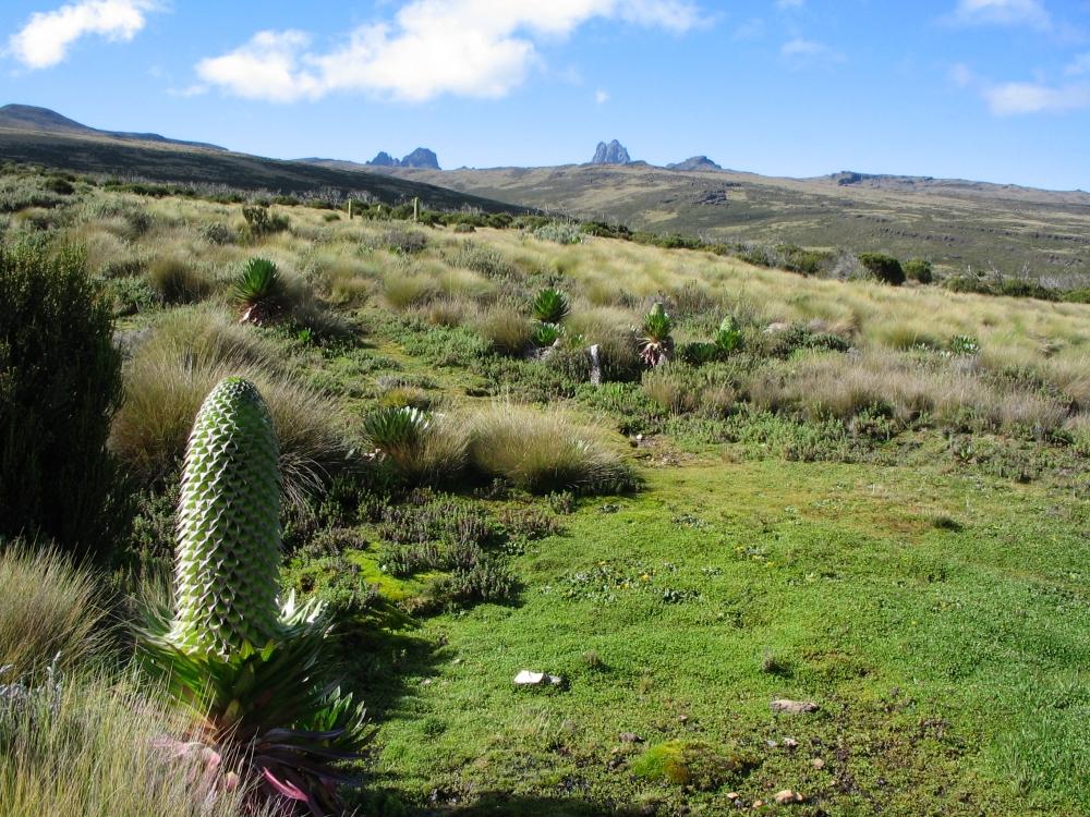 Monte Kenya, un patrimonio universale (1/2)