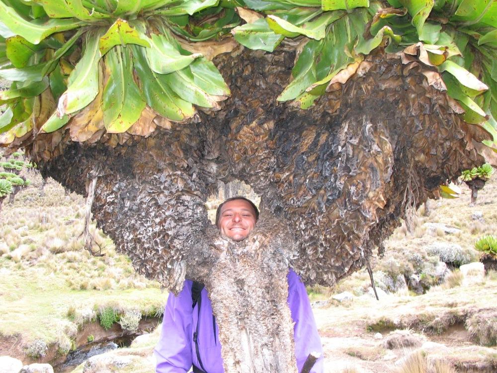 Monte Kenya, un patrimonio universale (2/2)